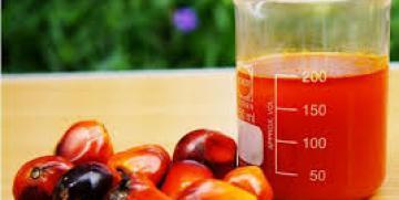 Dieta: olio di palma. Sfatiamo alcuni miti con i nostri dietisti